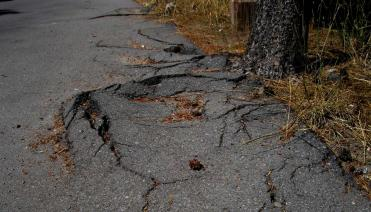 Tree roots pushing up and damaging asphalt driveway.