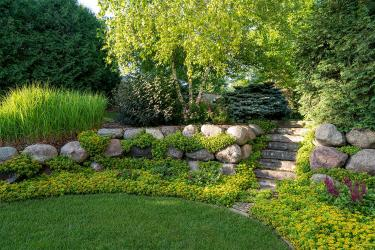 Lush green grass lawn surrounded by Sedum garden and boulder retaining wall with stone steps leading to a fireplace.