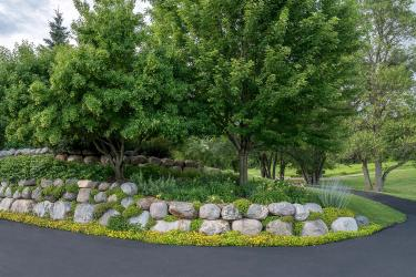 yellow flowers spilling over boulder retaining wall with green gardens and trees in an island garden surrounded by a driveway.
