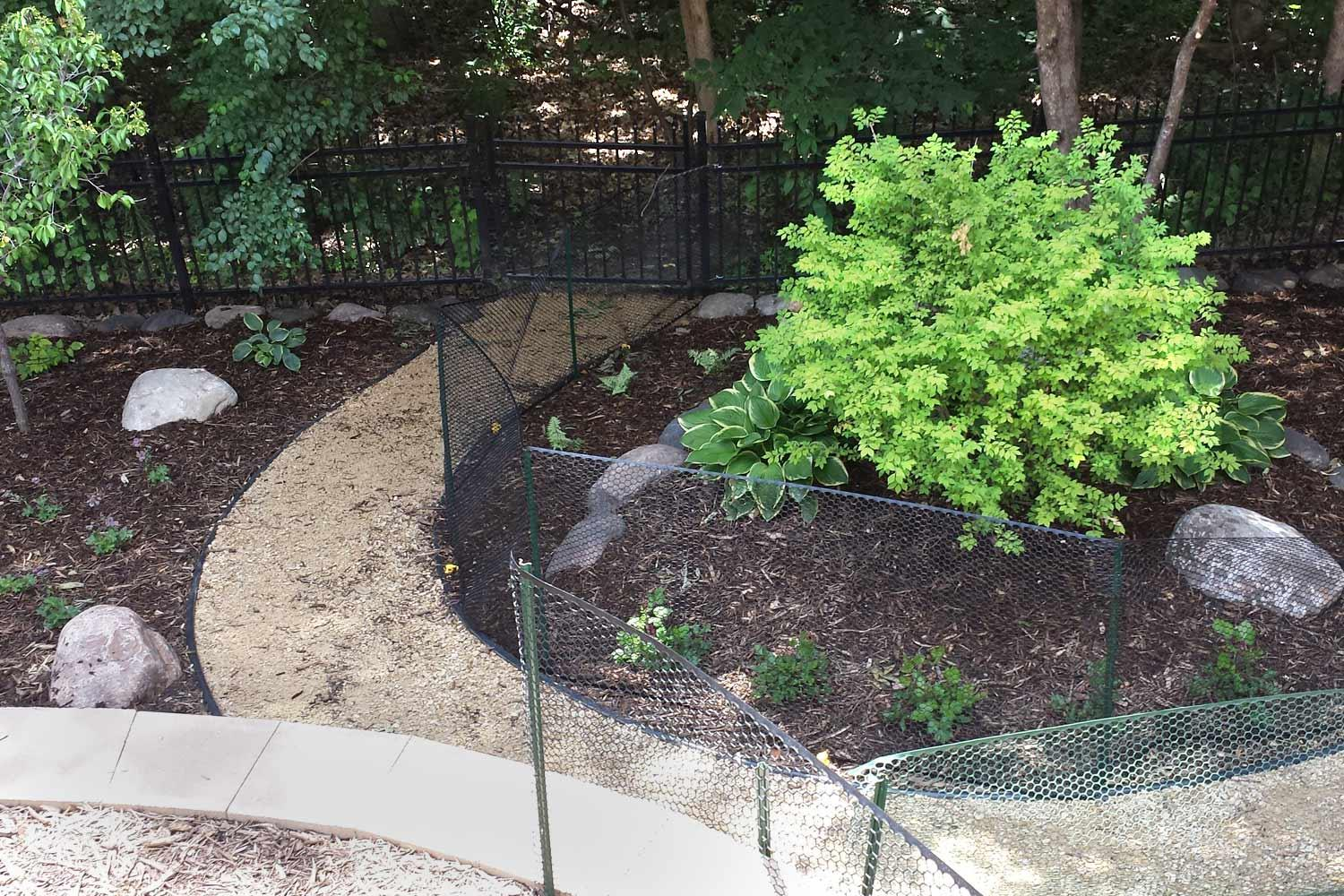 28+ Dog Friendly Backyard Ground Cover Images - HomeLooker