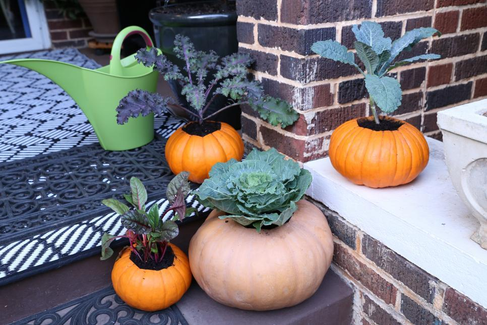 Pumpkins and gourds transformed into seasonal planters.