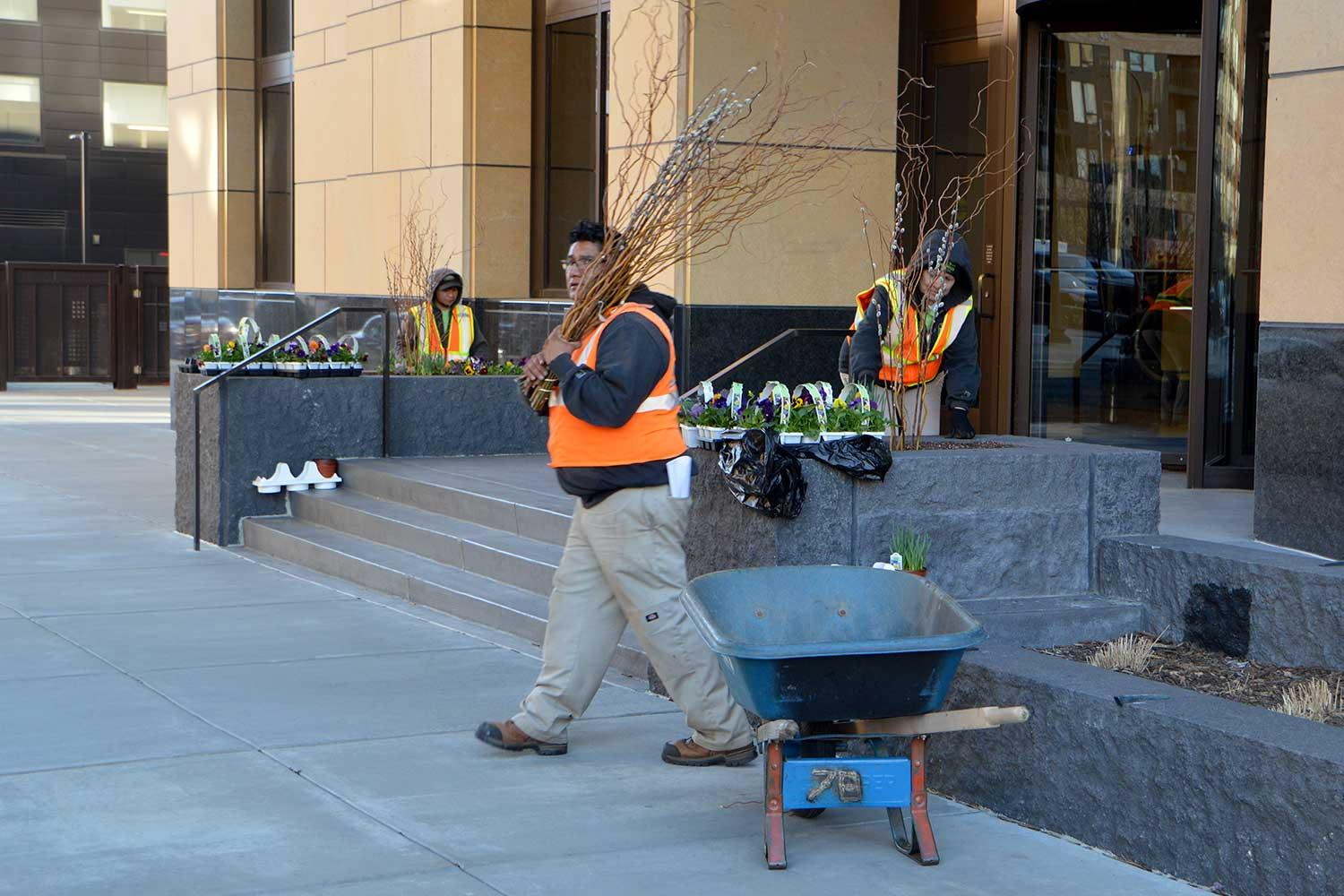 Assembling spring planter displays in downtown Minneapolis.