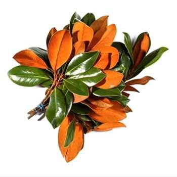 decorative magnolia tips