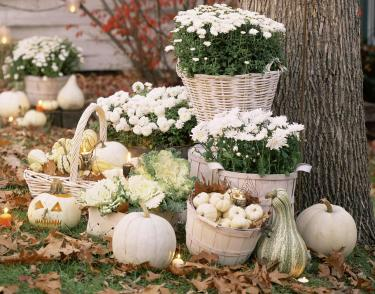 Monochromatic white fall decorative gourd display