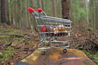 Miniature shopping cart in the forest.