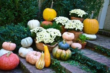 stacks of gourds and mums on brick font steps