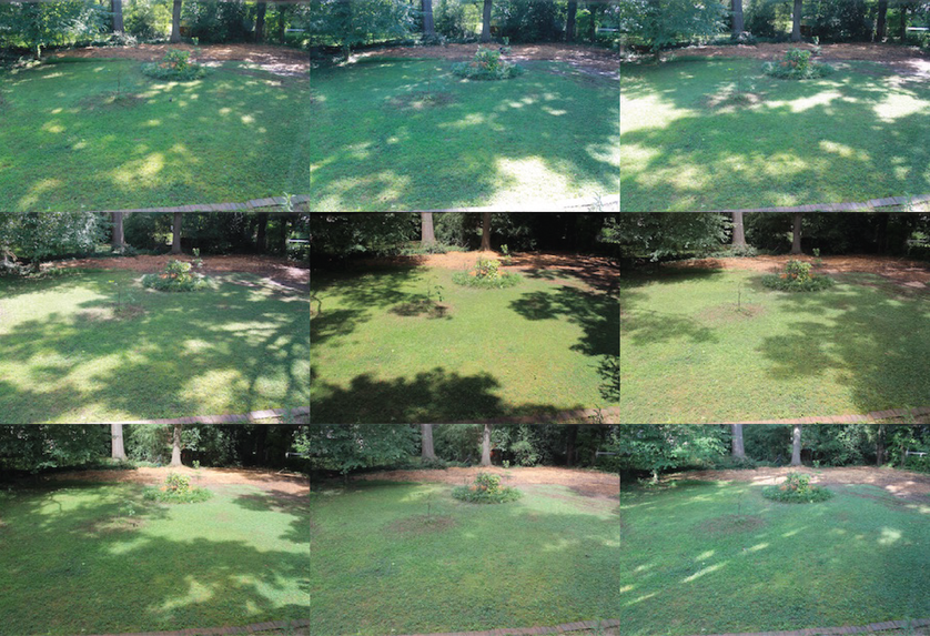 The same location photographed several times to track the amount of sun for a garden.