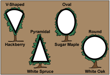 Four different tree shapes: V-Shaped, Pyramidal, Oval, and Round.